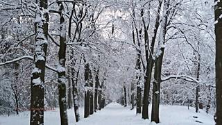 Winter in Holland, Snow road to Winter Wonderland, Zeist - 394