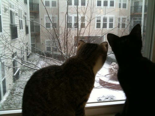 Kittens watch snow