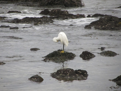egret between storms