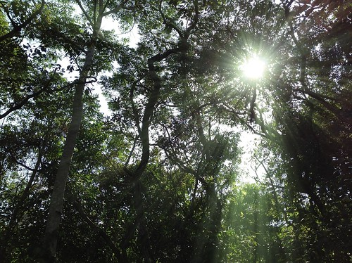 Sunshine through the canopy