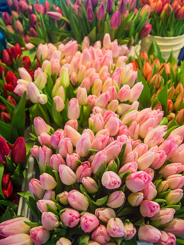 Tulips at Pike Place Market