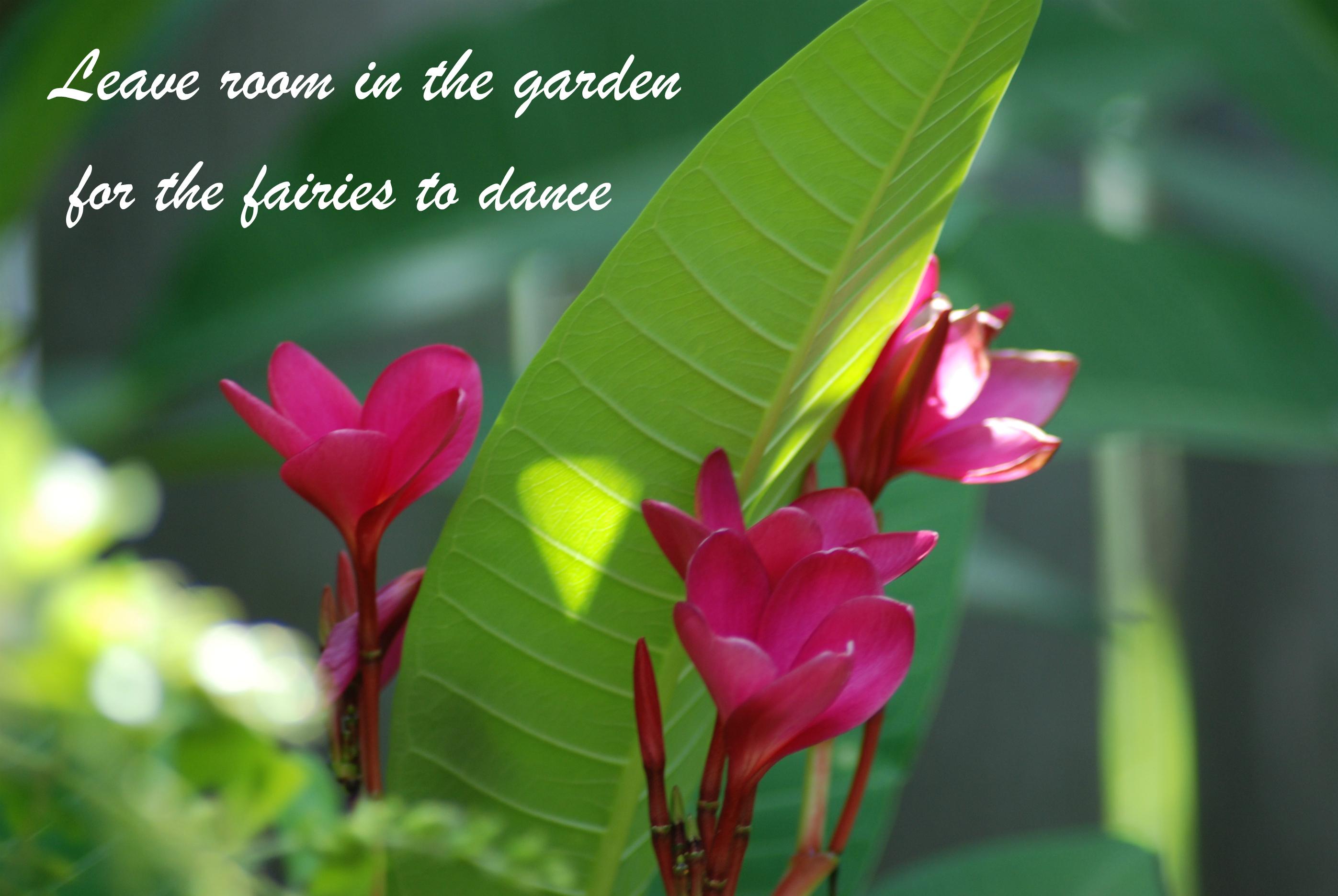 Fairies to Dance