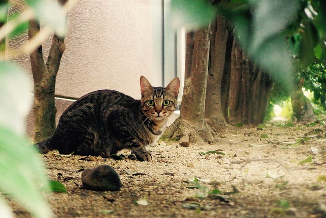Today's Cat@2016-09-19
