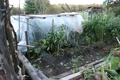 frost protected garden 030