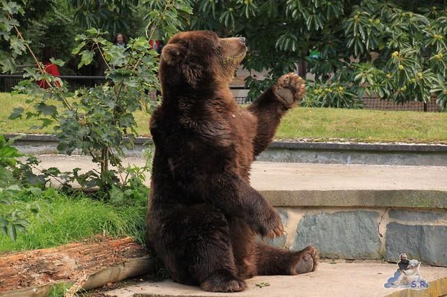 überall gleich diese Bären