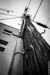 Up a pole