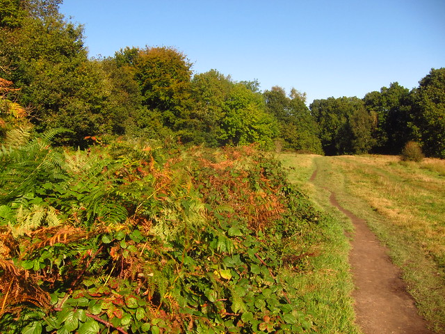 The Stock Pond Meadow