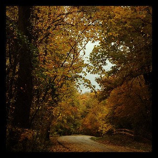 Last one for today! :-) #fall #leaves #trees