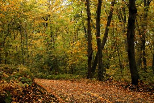 autumn autumnfoliage trees tree nature leaves colorful path autumncolors colorfulleaves blackstoneriverbikeway cumberlandrhodeisland