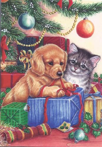 Kitten & Puppy at Christmas