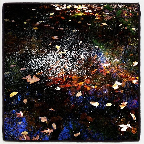 Paradise Lane Brook reflection
