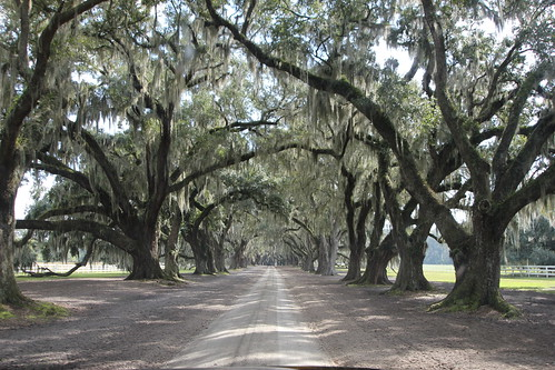 the entrance to tomotley plantation