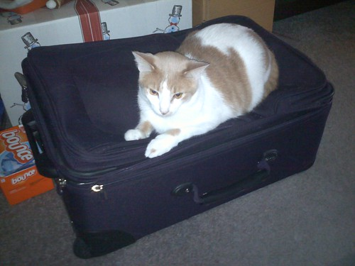Wembley on Jess's suitcase, Lansing Township, Michigan