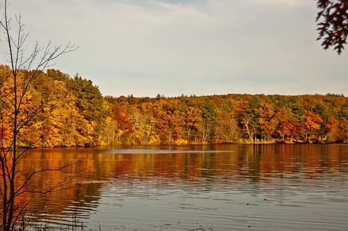 Rhode Island Foliage by Jerri Moon Cantone