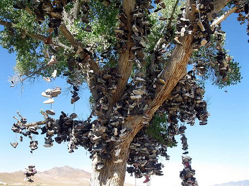 shoe tree, Nevada