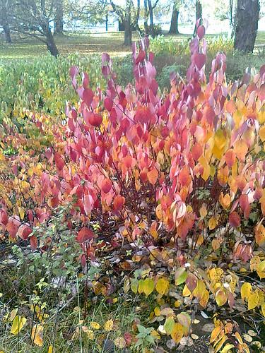 Sibeliuspuisto syksyllä by Anna Amnell