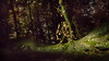 Nocturnal Tree Scene by Lens felicis