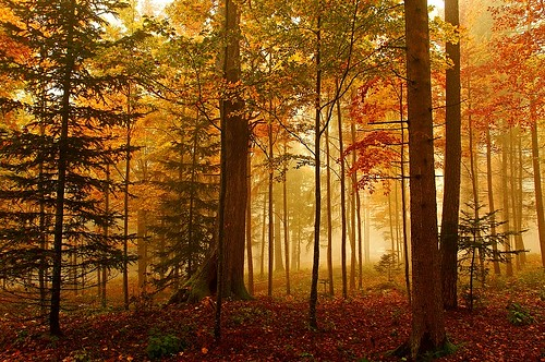 [フリー画像素材] 自然風景, 森林, 紅葉・黄葉, 風景 - スイス ID:201210310600