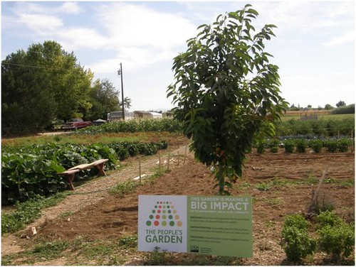 This Idaho People's Garden donated over 5,000 pounds of food this summer to the St. Vincent de Paul Food Pantry in Boise.