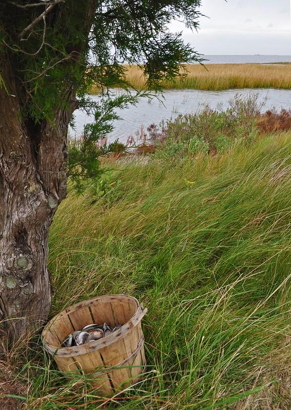 Metompkin Bay (13)