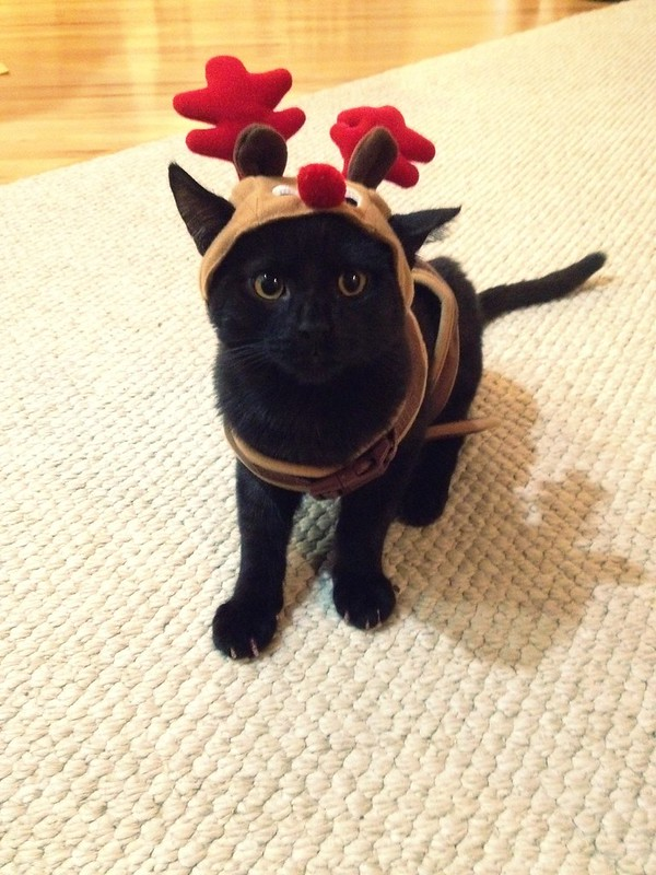 Teddy, the red nosed reindeer.