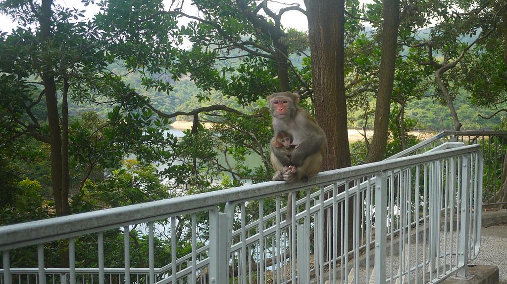 Parent & Child Macaque