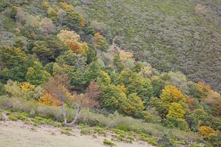 Colores de otoño -1