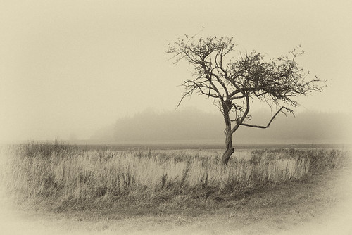 morning autumn mist tree fall fog sepia landscape alone lithuania lietuva bestcapturesaoi elitegalleryaoi
