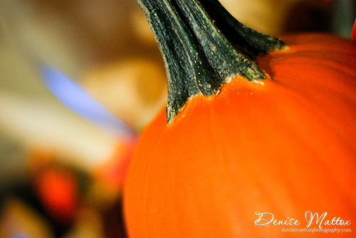 354: Pumpkin
