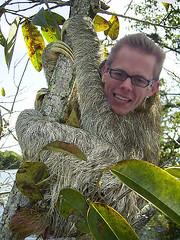 Sloth Dan