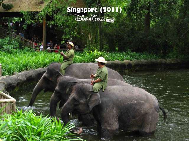 Day 3 Singapore - Zoo Singapore 20