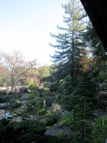 Hakone Japanese Gardens, Saratoga, CA, tree IMG_2403