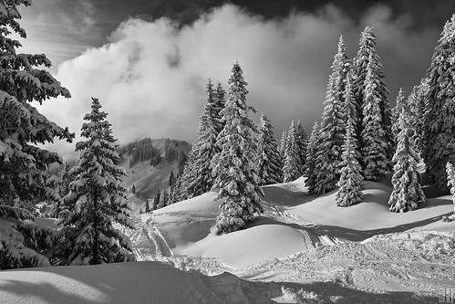 trees winter mountain holiday snow alps cold nature forest real austria 3d skiing foggy sunny powder downhill fresh skiresort firs skitracks alpinemeadows nob threedimensional deepsnow vitality laterns skigebiet firstrees gapfohl seilbahnenlaterns