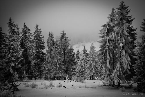 hiver neige paysage forêt givre sapins péquie