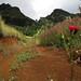Marquesas_10917