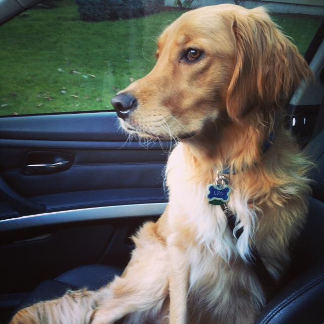 Nature S Domain Golden Retriever Dog Forums