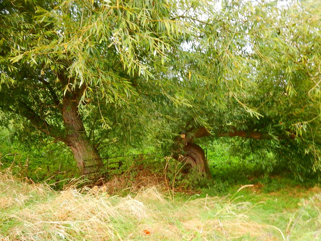 Willows Ely Circular