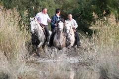Courses, abrivados, encierros, roussatailles... site fotos 8079494770_daf691632d_m