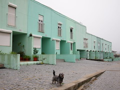 Porto: Houses and dog