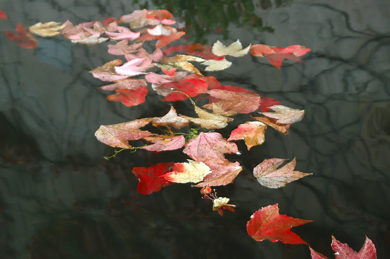 LAST LEAVES ON THE WATER... by magda indigo