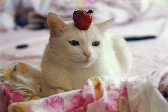 Strawberry cat - 無料写真検索fotoq