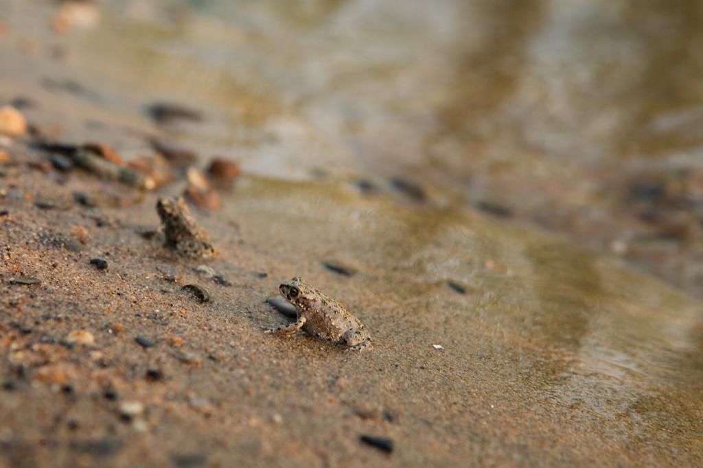 Маленькие лягушки, фото