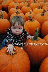 pumpkinpatch7