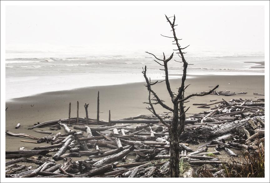 Kalaloch Beach 2