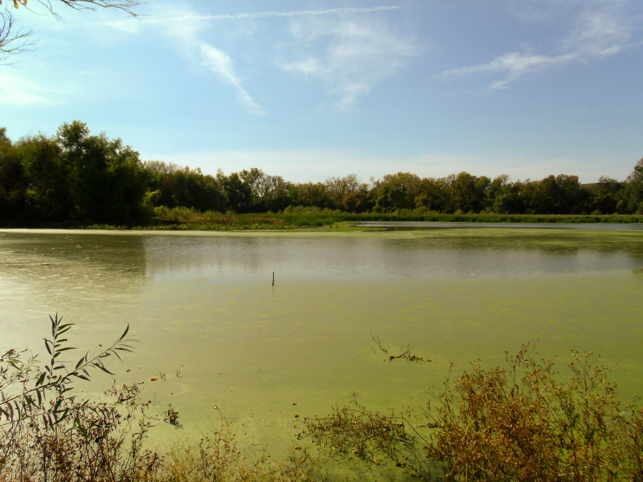 Loop Island Wetlands New Albany