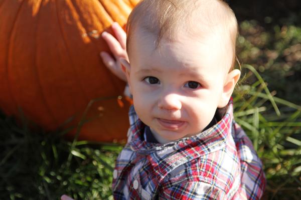 ShepPumpkin
