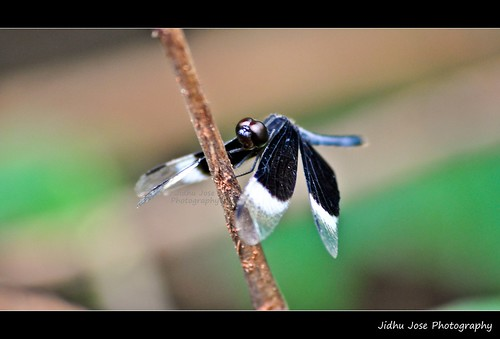 Dragon Flies by Jidhu Jose