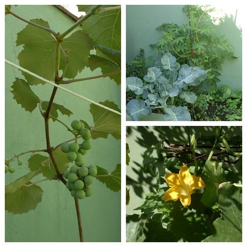 Minha  pequena horta by fatimalt