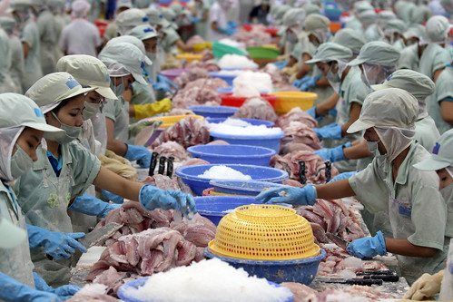 Vietnam workers processing fish. Photo credit: Flickr @World Bank - East Asia and Pacific (https://www.flickr.com/photos/worldbank_eastasiapacific/)