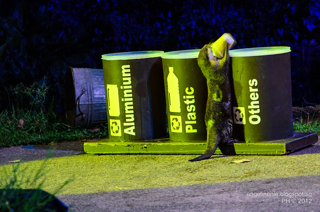 Otters and recycling
